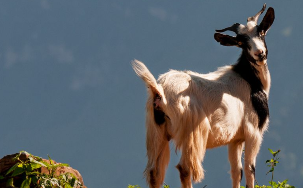 2021年八月生肖羊的财运运势如何?