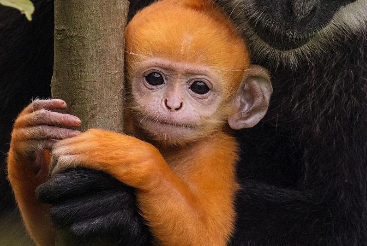 2021年八月生肖猴的财运运势如何?
